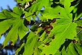 Rust Colored Holes In Leaves