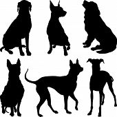 picture of newfoundland puppy  - set of silhouettes of dogs pinscher ridgeback hound pointer Newfoundland Dalmatians breed in various poses - JPG