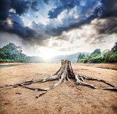 Dry Stump