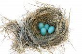 Robin's Bird Nest