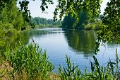 foto of birching  - Summer pond with birch trees in nature