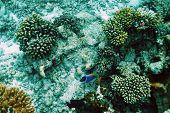Coral reef at South Ari Atoll, Maldives
