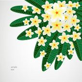 Eps10 Floral design background. Plumeria flowers.