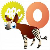O is for Okapi