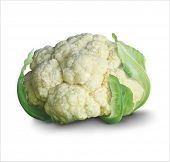 Fresh cauliflower. Vector eps 10.