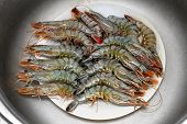 stock photo of crustacean  - Fresh and raw seafood shrimps crustaceans catch - JPG