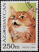A stamp printed in Azerbaijan shows cat somali