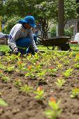 Gardener in Lima, Peru