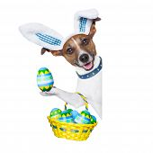 stock photo of bunny costume  - dog dressed up as bunny with easter basket full of eggs - JPG