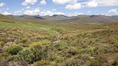 Pastoral scene at high altitude in Lesotho