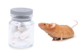 stock photo of fancy mouse  - little fancy mouse sniffng bottle of pills - JPG
