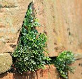 Plants on stone wall