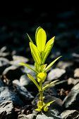 Bright Green Plant