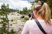 pic of female buffalo  - close up of a wildlife photographer in yellowstone national park taking a close up picture of a wild bison - JPG