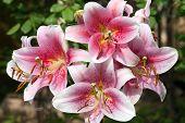 Big Lily Bunch Flower