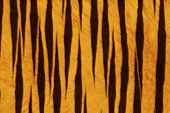 Fur Animal Textures, tiger