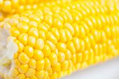 pic of corn-silk  - The close up grains of ripe corn - JPG