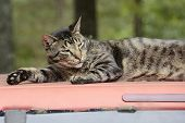 Cat Resting on a Truck Top in Missouri
