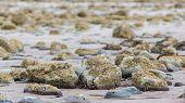 Big Stones On Scottish Coast Landscape