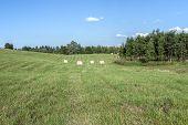 Lithuanian Fields In Autumn