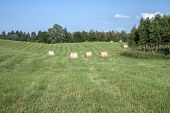 Ressed Hay And Left The Field