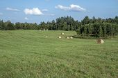 Lithuanian  Fields