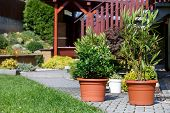 Flowers In Pot Outdoor