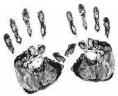 Print Of Real Hands