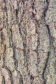 Texture Of Bark