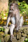 Watchful Monkey