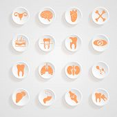 pic of ovary  - Body Icons button shadows vector set vector eps10 - JPG