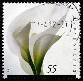Postage Stamp Germany 2011 Flower, Mourning