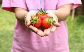 Women Holding A Ripe Strawberries