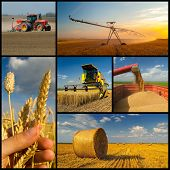 Agricultural Collage Representing Phases Of Wheat Production