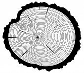 pic of white bark  - vector black and white wooden cut of a tree log with concentric rings and bark - JPG