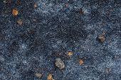 Ash After Grass Burn