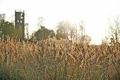 picture of freedom tower  - Field of grain - JPG