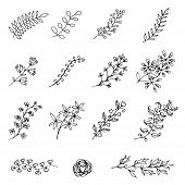 Set Of Hand-drawn Vintage Floral Branches And Design Elements
