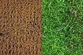 Newly Grown Grass And Newly Prepared Soil