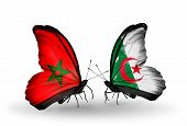picture of algeria  - Two butterflies with flags on wings as symbol of relations Morocco and Algeria - JPG