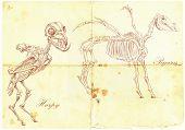 An Hand Drawn Vector: Harpy, Pegasus
