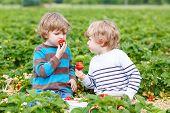image of strawberry blonde  - Two little friends having fun on strawberry farm in summer - JPG