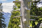 pic of bavaria  - Trunk on the mountain Breitenstein in the Alps in Bavaria Germany - JPG