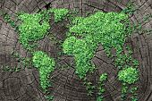 picture of tree leaves  - Global spread concept and development as a business concept with a map of the world made of an organized group of persistent vine leaves growing on a dead tree trunk as an environmental conservation symbol and icon for renewal - JPG
