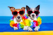 foto of married  - cozy couple of dogs in love just married on honeymoon summer holiday vacation at the tropical beach wearing heart shaped sunglasses and flower chain - JPG