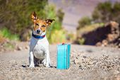 stock photo of jacking  - jack russell dog abandoned and left all alone on the road or street with luggage bag or suitcase begging to come home to owners - JPG