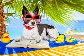 picture of palm-reading  - terrier dog reading a book and relaxing under the palm at the beach enjoying the summer vacation holidays - JPG