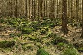 foto of decomposition  - The primeval forest with mossed ground and boulders - JPG