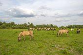 pic of herd horses  - Herd of wild horses grazing in nature in spring - JPG