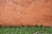 foto of ivy vine  - brick wall and green leaf ivy - JPG